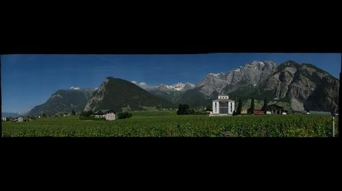 vineyard Switzerland