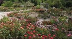 Rose Garden, South Coast Botanical Garden