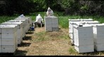 Bee Research in Arrowwood National Wildlife Refuge