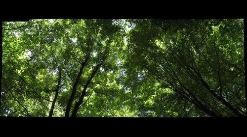 Canopy in Guyasuta Park