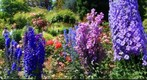 Butchart Gardens (2)