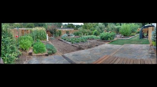 Backyard 7-15-09