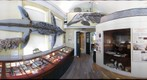 Lyme Regis Museum geology gallary