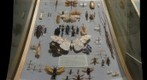 Insect Diversity case in Carnegie Museum of Natural History