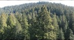 old-growth forest canopy, Redwood National and State Parks_7