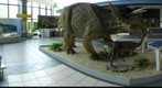 Triceratops and friends