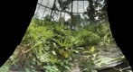 Rain Forrest Butterflies: Butterfly Wing of the Houston Museum of Natural Science  4/4