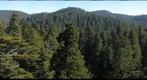 old-growth forest canopy, Redwood National and State Parks_3