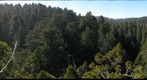 old-growth forest canopy, Redwood National and State Parks_2