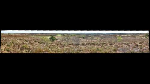 Thomas Hardy's Egdon Heath