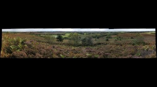 Thomas Hardy's Egdon Heath in September