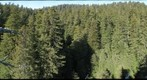 old-growth forest canopy, Redwood National and State Parks_1