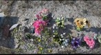 PC-09-PR-D2-GIGAPAN-woundedkneegrave1