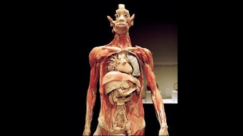 Bodies... The Exhibition - Digestive