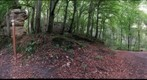 Geastrum triplex (360) 