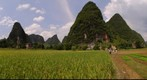 Rice field near Yangshuo (China)