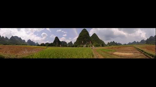 Rice field near Yangshuo (China)