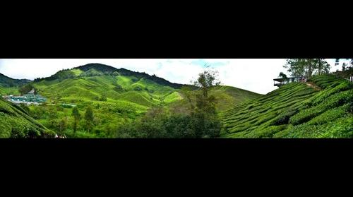 Cameron Highlands Boh Tea Plantation (4)