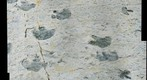 #3 High-Resolution Dinosaur Tracks from Dinosaur Ridge, Denver, Colorado (enhanced)