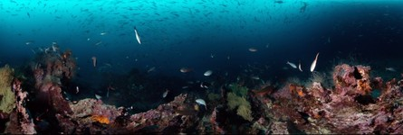 Galapagos Coral Reef and Fishes - 360 degree underwater panorama