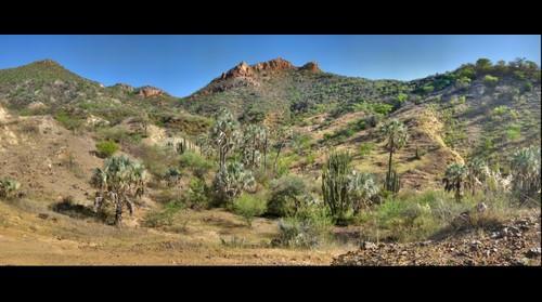 Dubural Hills Gigaplot Sep 09 - Northern Jaguar Reserve