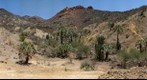 Dubural Hills Gigaplot Jun 08 - Northern Jaguar Reserve