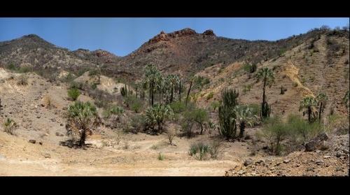Dubural Hills Gigaplot Jun 08 - Northern Jaguar Reserve