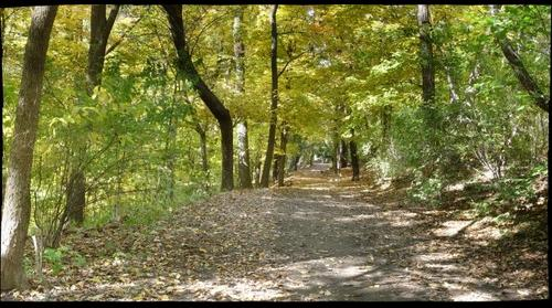 Frick Park path