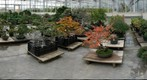 Bonsai Greenhouse, Phipps Conservatory