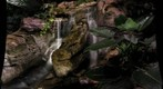 Waterfall and Frogs at Phelps Conservatory