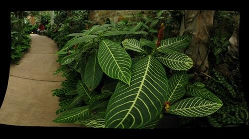 Phipps Conservatory_02