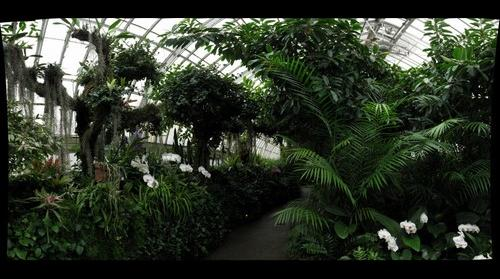 Orchid Garden, Phipps Conservatory