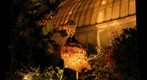 Phipps Discovery Garden at Night