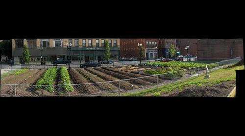 Munroe Street Farm - Lynn, MA