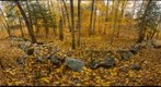 Northern Hardwood Forest and Stone Wall, Salisbury, Vermont