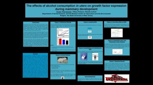 whereRU: Aresty Poster 1-The effects of alcohol consumption in utero on growth factor expression during mammary development