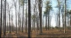 ALEX_S_SUGARBUSH _NOV11_2009_PAN_2