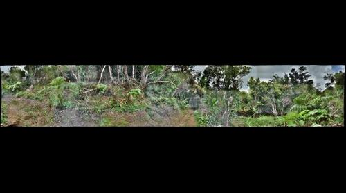 Manoa Cliff Trail #1