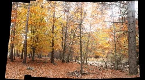 Bosque de Hayedo.Soria.