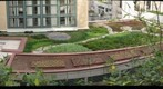 Doherty Hall Green Roof