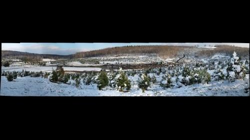 Battenfeld christmas tree farm