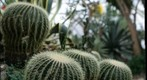 cacti at Phipps Conservatory, focal depth 2 of 5