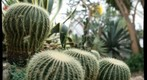cacti at Phipps Conservatory, focal depth 3 of 5