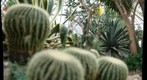 cacti at Phipps Conservatory, focal depth 4 of 5