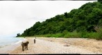 Baboon on beach