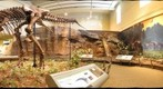 Cretaceous Hall