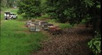 Honey Bee Hives in Macadamia Orchard