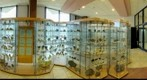 Mineral collection, Museum of Earth Sciences