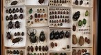 Insect Drawer (scarabs) Take 2