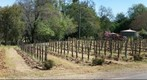 Quivira Biodynamic Winery in Dry Creek Valley, Sonoma County, California, March 23rd, 2008